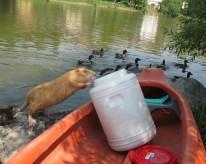 Vodácký víkend na Sázavě a grilování